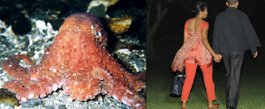 octopusmichelleobama