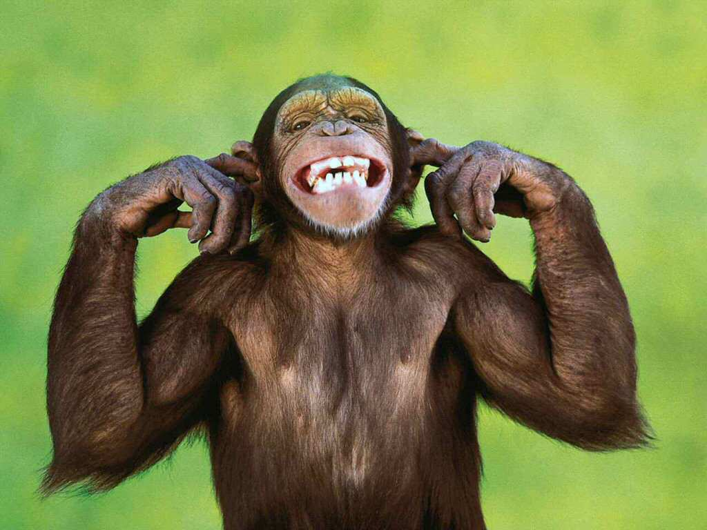 42704_smiling_monkey[1]