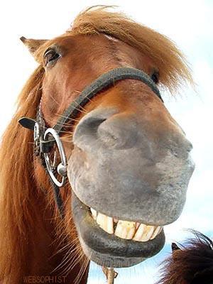 HorseSmile2O[1]
